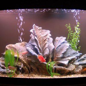 Аквариум своими руками: пошаговая инструкция как сделать красивый и надежный аквариум