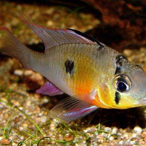 Аквариумные рыбки: инструкции как сделать аквариум и подобрать для него обитателей (80 фото)