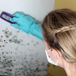 Грибок в ванной комнате: как вывести и навсегда избавиться от плесени и грибка своими руками