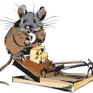 Как нарисовать мышь: пошаговая инструкция для начинающих (схемы + инструкция)