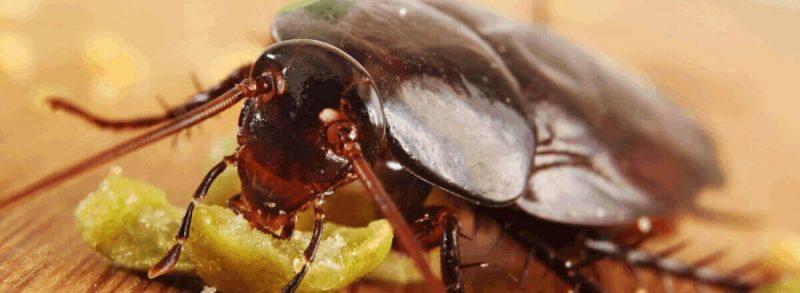 Как избавиться от тараканов: эффективные средства для быстрого и простого избавления от насекомых