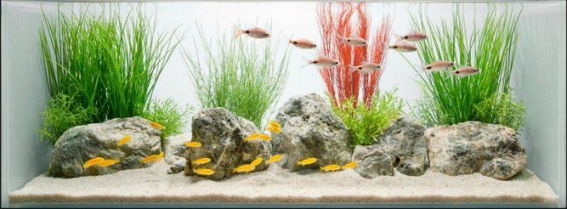 Как очистить аквариум – простая инструкция как правильно чистить домашний аквариум (90 фото)