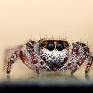 Паук в доме: как быстро избавиться от полезного насекомого и его паутины?