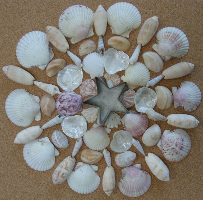 картинки из природного материала морские ними