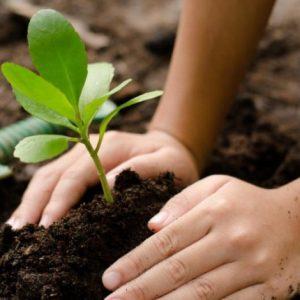 Рассада своими руками: способы выращивания и советы как подготовить место для рассады