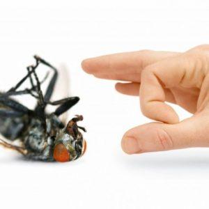 Средство от мух – основные способы борьбы и обзор самых эффективных методов (85 фото)