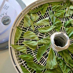 Сушилка для овощей: самодельная универсальная сушилка для фруктов и овощей своими руками (95 фото)