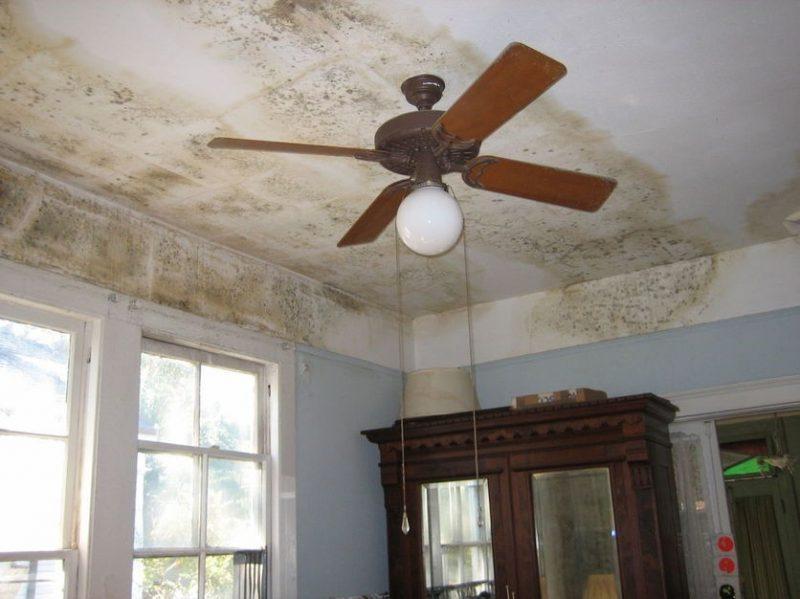 картинки плесень на потолке гладкости супер