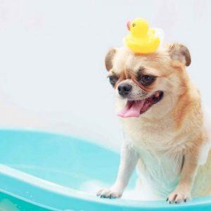 Как избавиться от запаха собаки – способы и средства избавления от неприятного запаха псины (75 фото)
